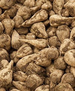 Benefits of Sugar Beet Extract for Hair
