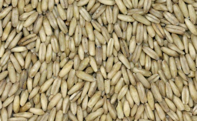 oat kernels