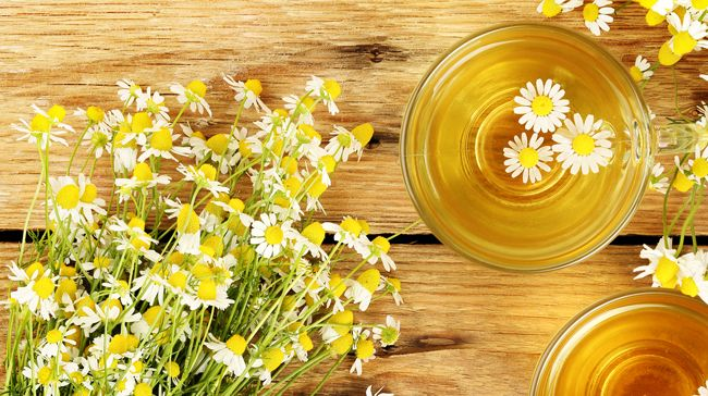 Fresh chamomile flowers and two cups of chamomile tea