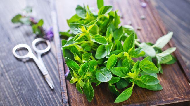 marjoram leaf oil for curly hair