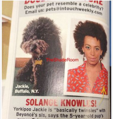 solange dog hair comparison