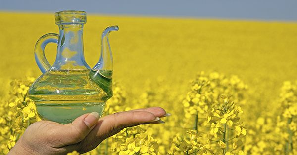 Why You Should Use Rapeseed Oil For Your Scalp Naturallycurly Com