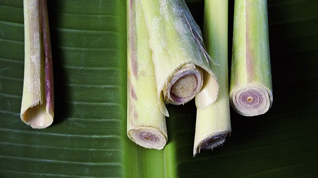 lemongrass for oily hair