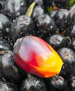 How Red Palm Oil Can Change Your Hair Growth Game