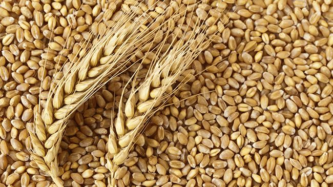 wheat protein for hair breakage