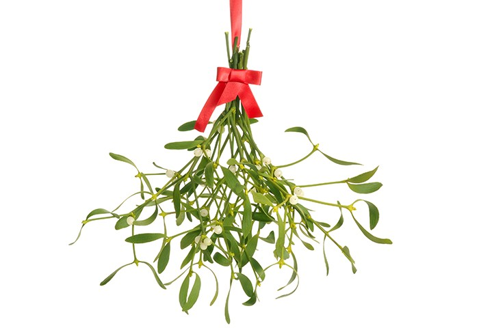 mistletoe s and body